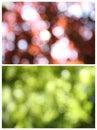 Nature Blur