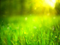 Nature blurred background. Green grass Royalty Free Stock Photo