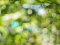 Nature Bokeh Background
