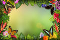 Nature border with flower and butterfly Royalty Free Stock Photo