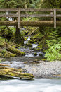 Nature bridge near marymere falls olympic national park vertical photo of over stream with trees and rocks Stock Images