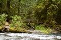 Nature Bridge near Marymere Falls, Olympic National Park Royalty Free Stock Photo