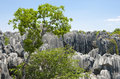 Nature of China (Stone Forest National Park) Stock Images