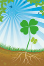 Nature clover Stock Images