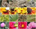 Nature collage colourful of various natural items Royalty Free Stock Photo