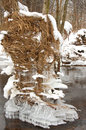 Nature creations from wind snow ice water tree and old grass Royalty Free Stock Image
