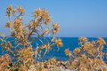 Nature of Crete Royalty Free Stock Photo