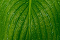 Nature details drops on green surface of leaf Royalty Free Stock Image