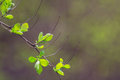 Nature easters background of the young spring leaves Royalty Free Stock Photography