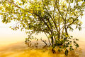 Nature of ethiopia mist fog tree and Royalty Free Stock Images