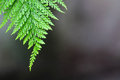 Nature of ferns in garden on black background Royalty Free Stock Photo