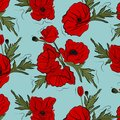 Nature floral poppy pattern vector image. Red petal nature plants isolated on blue background. Botany spring summer