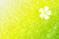 Nature And Flower Abstract Sof...