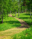 Nature footpath in the green summer forest Royalty Free Stock Photo