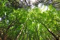 Nature forest trees fisheye view Royalty Free Stock Photo