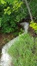 Nature frog dog creek exploring Royalty Free Stock Images