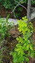Nature frog dog creek exploring Royalty Free Stock Photography