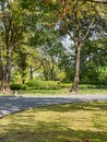 Nature garden in chachoengsao thailand Royalty Free Stock Image