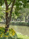 Nature garden in thailand Stock Photo