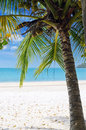 Nature green tree on a white sand beach Royalty Free Stock Photos