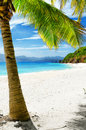 Nature green tree on white sand beach malcapuya island palawan philippines Stock Photo
