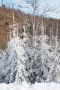 Nature in High Tatras, Slovakia