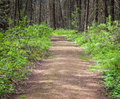 Nature hiking trail through forest Royalty Free Stock Photo