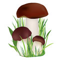Nature illustration mushroom in grass isolated on white background summer symbol collection collection Stock Image