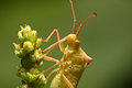Nature image showing details of insect life: closeup / macro of Royalty Free Stock Photo