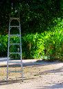 Nature ladder under a big tree Royalty Free Stock Photography