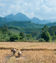 Nature Landscape Of Laos