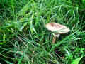 Nature landscape on the mountain summer mushroom detail Royalty Free Stock Photo