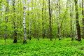 Nature landscape view of a green forest jungle on spring season with green trees and leaves. Peaceful tranquil outdoor scenery Royalty Free Stock Photo