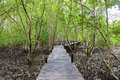Nature learning path, made from wooden, and walk through Ceriops Royalty Free Stock Photo