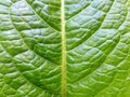 Nature Macro Details