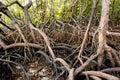 Nature Mangrove