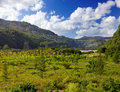 Nature Of Mauritius.Mountain L...