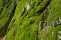 Nature Moss background