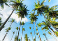 Nature palm trees against blue sky Royalty Free Stock Photography
