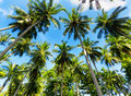 Nature palm trees against blue sky Royalty Free Stock Image