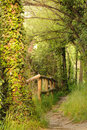 Nature path with fence in the woods Royalty Free Stock Photo