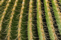 Nature patterns- cactus Stock Photography