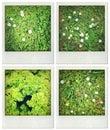 Nature Photos