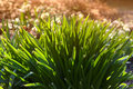Nature Reborn - Springtime