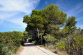 Nature reserve in majorca of s albufereta Royalty Free Stock Image