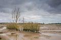 Nature Reserve Mudflats