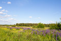 The nature of russia road in a wild field of flowers photo was taken Stock Photos