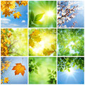 Nature seasons collage spring summer autumn Stock Photos