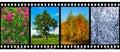 Nature Seasons In Film Frames ...