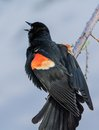 Nature Shot Of Bird